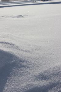 170121 ほろたちスキー場 - スノーボードとイヌ