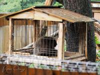 埼玉県こども動物自然公園 7月30日 - お散歩ふぉと