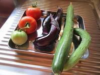 今朝の収穫(野菜) - ごまめのつぶやき