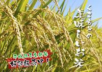 七城米長尾農園平成29年度のお米も美しく、元気に成長中!!平成28年度の『七城米』残りわずかです! - FLCパートナーズストア
