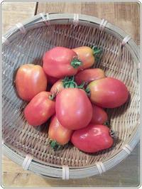 田舎便り106 トマトソース - タワラジェンヌな毎日