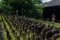 奈良・元興寺~石仏の間に咲く桔梗 - 鏡花水月