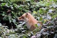 日本の里山 - 動物園に嵌り中