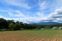 草抜き - 葡萄と田舎時間