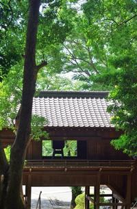 中山法華経寺の森1 - はーとらんど写真感