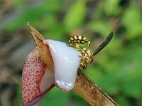 ヘボ三昧① - 清治の花便り