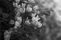 Floral - SONGS