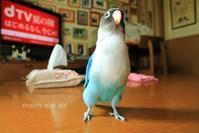 B.B & Chipo* B.Bの「残念っ。。」 - FUNKY'S BLUE SKY