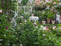 8月の庭  🎶 - 薔薇に魅せられて