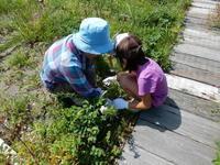 夏休み自然教室「植物ミニ標本作り」開催しました。 - 石狩浜観察日記