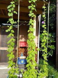 今年1個目の朝顔と夏の花〜うちの庭〜 - 日々ニコニコ