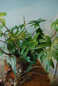 観葉植物たち - 花と暮らす店 木花 Mocca