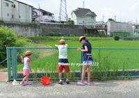 初めてのザリガニ釣り - nyaokoさんちの家族時間