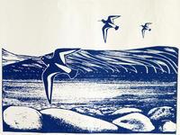 ミヤコドリ オイスターキャッチャーのティータオル - ブルーベルの森-ブログ-英国のハンドメイド陶器と雑貨の通販