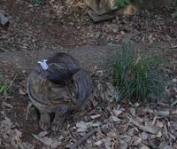 Cat look staring - いんちきばさらとマクガフィン…のアーカイヴ
