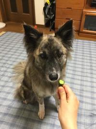 Love ! cucumbers ♪ - 琉球犬mix白トゥラーのピカ
