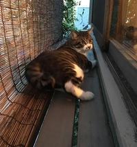 猫の心地よい場所 - 楽家記(らくがき)