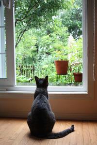 黒猫君お見合い予定となりました。 - 小さな森のキキとサラ