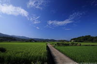 明日香の夏 - ratoの山歩き