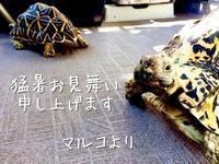 夏のごあいさつ - カメカメナツメ