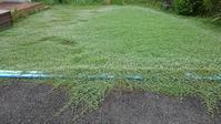 クラピア刈り4回目 - うちの庭の備忘録 green's garden