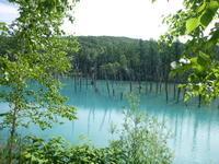 北海道美瑛町青い池見学 - 風の便り