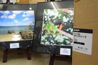石垣島撮影旅行の写真展準備中 - PhotoStudioオオタケ