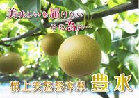 熊本梨 希少品種『豊水(ほうすい)』平成29年度の先行予約受付スタート!! - FLCパートナーズストア