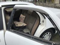 宇都宮市から放置車両をレッカー車で廃車の引き取り撤去しました。 - 廃車戦隊引き取りレンジャー