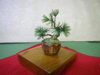 ミニチュア盆栽(松2)出品 - カワセミ工房 鎌倉 (旧絵手紙いろは印)
