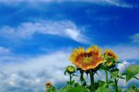 夏の日 - 彩