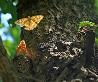 樹液レストラン - イーハトーブ・ガーデン