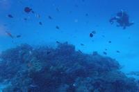 17.8.13抜群!の海況!キました。 - 沖縄本島 島んちゅガイドの『ダイビング日誌』