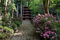 石楠花の室生寺 - 花景色-K.W.C. PhotoBlog