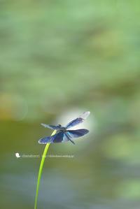 夢で逢いましょう - お花びより