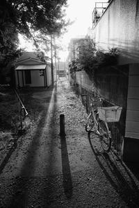 久しぶりのご近所徘徊 - Photo & Shot