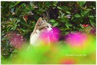 ねこやすみ - 陽だまりベンチ+me