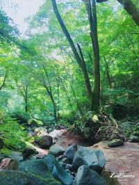 名水の滝 - Le petit cadeau