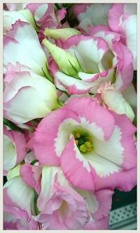 8月15日 終戦記念日 - フローリスト作家 「秋津はな」 の 子供のいない女性のお悩み・心情ブログ