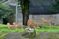 滝登り - 動物園へ行こう