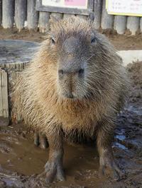 8月16日(水)躊躇 - ほのぼの動物写真日記