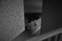 Snap No218 - 東京Shy 写歩く
