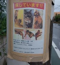 迷い猫がいるようです - もるとゆらじお