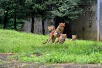 シュパーブ親子 - 動物園へ行こう