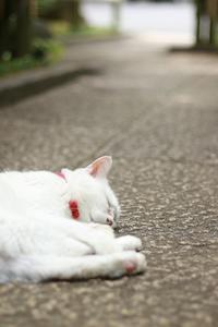 Happy Caturday★にゃんこのいる庭園美術館★ - paradise camera