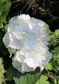相反する季節感 - HOME SWEET HOME ペコリの庭 *
