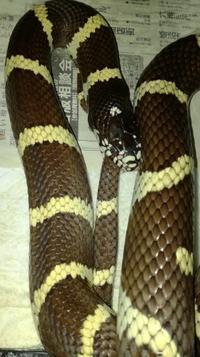 ウロボロスの蛇 - 自由なB型でごめんなさい