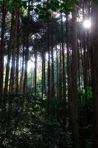 朝の檜林 - きずなの家