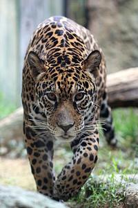 「小助」と「アラシ」 - 動物園放浪記