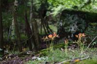 山肌染める初秋の色 - ecocoro日和